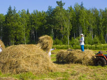 Haymaking in Siberia 19. The image of preparation of hay peasants in Siberia Royalty Free Stock Image