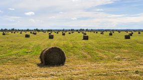 Haymaking Stock Photos