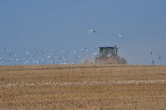 Haymaking tractor and seagulls flying behind him. Royalty Free Stock Images