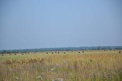 Haymaking, verano, Rusia, paisaje, julio Fotos de archivo libres de regalías