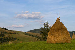Hayrick. On field in Carpathian mountains Stock Photo