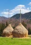 Hayricks в сельской местности Стоковое Изображение