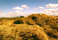 Hayricks. Some hayricks stock images