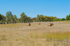 Hayricks in a farm landscape Stock Images