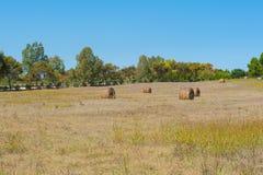 Hayricks in a farm landscape Stock Images