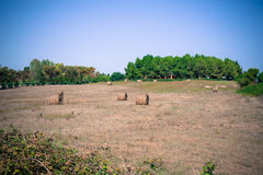 Hayricks in a farm landscape. Vintage colors and blue sky Stock Image