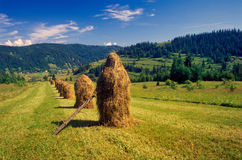 Hayricks. Handmade hayricks near Osturna village, Zamagurie region, Slovakia Royalty Free Stock Images