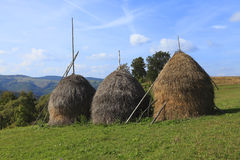 Hayricks in a mountainous area. Landscape with three hayricks in Apuseni Mountains,Transylvania,Romania Stock Photography