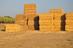 Hayricks pile. Hayricks at the field in Galilee. (Nothern Israel Royalty Free Stock Images