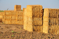 Hayricks pile. Stock Photo