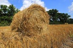 Hayrolls on crop field Stock Image