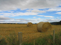 Hayrolls in a field. A picture of rolls of hay in a field in Scotland Stock Image