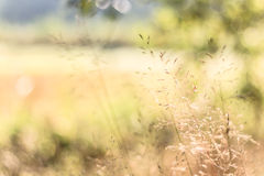 Hays and field in autumnal pastel colors. Golden hays and a blurred bokeh-kind-of field at the background in autumnal pastel colors. Great DoF Stock Photo