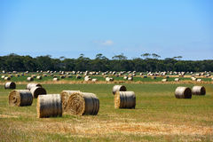 Hays on the field. Passing by this scenery while heading to Great Ocean Road Stock Photo