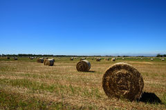 Hays on the field. Passing by this scenery while heading to Great Ocean Road Royalty Free Stock Images