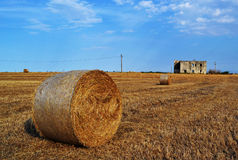 Hays field on summertime Royalty Free Stock Photo
