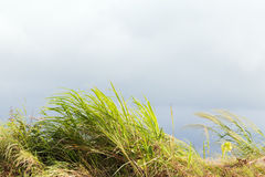 Hays, grass, plants and overcast sky. Stock Photography