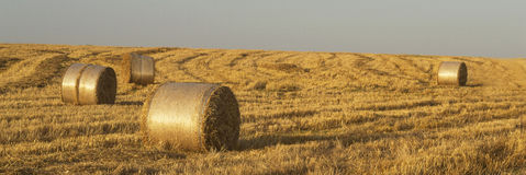 Hays on summer field Royalty Free Stock Photography