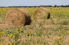 haystack łąka Obraz Royalty Free