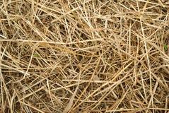 haystack крупного плана стоковые изображения