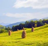 haystack поля стоковая фотография