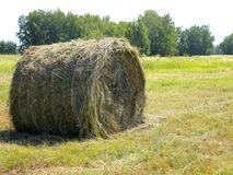 haystack Immagine Stock