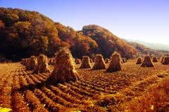 haystack Obrazy Stock