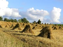 Free Haystack Royalty Free Stock Images - 203439