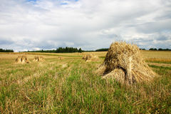Haystack. Field Stock Images