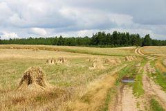 Haystack. / field and road Stock Photo