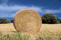 The haystack. In the field Royalty Free Stock Images