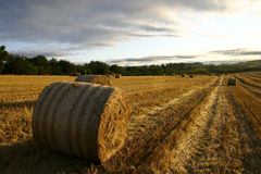 Haystack. Newly cut hay bale, taken at sunrise Stock Photography