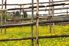 haystack Imagem de Stock
