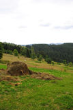 haystack Imagenes de archivo