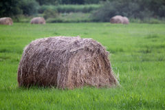 haystack images stock