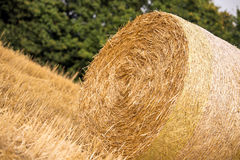 Haystack. On the agriculture field during wheat harvest time stock photos