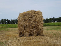 Haystack on the agriculture mowed field Royalty Free Stock Photography