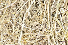 Haystack as background. Royalty Free Stock Photos