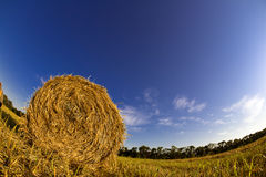 Haystack in autumn field Royalty Free Stock Photography