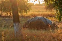 Haystack on autumn sunset Stock Photography