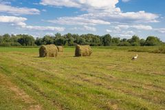 Haystack on background of field and grass. Beauty sustainable rural landscape. royalty free stock image