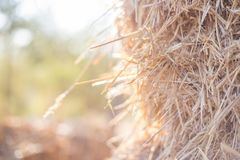 Beautiful Haystack background back light DOF. Haystack background natural yellow and brown Buy wheat in the filed DOF with back lights Stock Photos