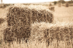 Haystack close-up lying Royalty Free Stock Photography
