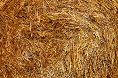 Haystack in the countryside of Belarus. In the falln Royalty Free Stock Photos