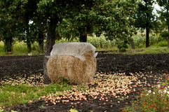 Haystack covered with polyethylene from the rain Royalty Free Stock Photo