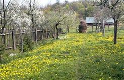 Haystack and dandelions 2. Haystack and dandelions in Transylvania Stock Photos