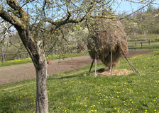 Haystack and dandelions 3. Haystack and dandelions in Transylvania Royalty Free Stock Photography