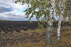 Haystack en tierra de labrantío con el abedul Fotos de archivo