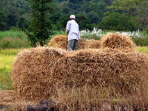 Haystack Farmer Stock Photo