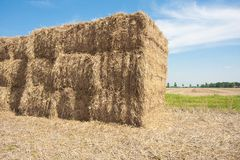 Haystack in the  farmland of the Netherlands Royalty Free Stock Photo